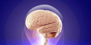 Cerebrum merupakan bagian otak manusia yang terbesar yang disebut juga otak besar.